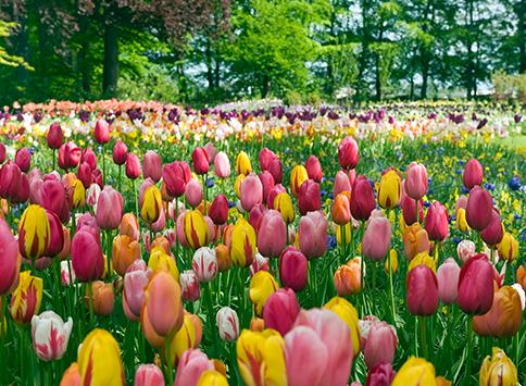 Voordelen-van-bloembollen-thumb