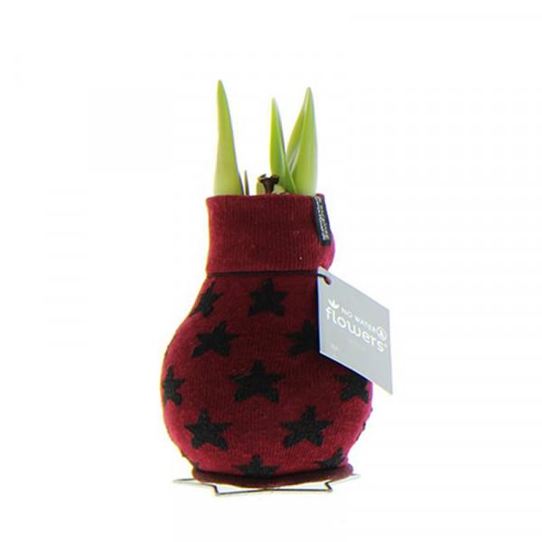 Wax Amaryllis Patterns Star Bordeaux