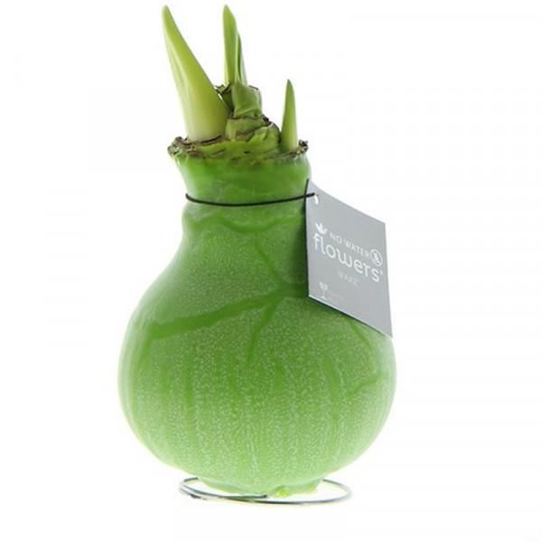 Wax Amaryllis Marble Green
