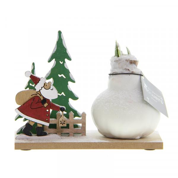 Wax Amaryllis Snow Wonderland Santa