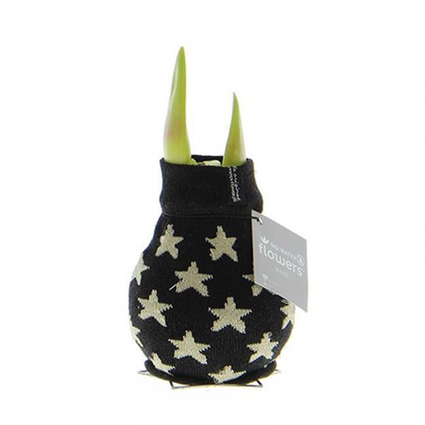 Wax Amaryllis Patterns Star Zwart