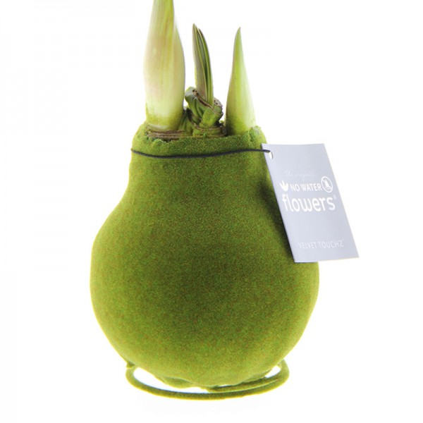 Wax Amaryllis Velvet Touchz Moss Green