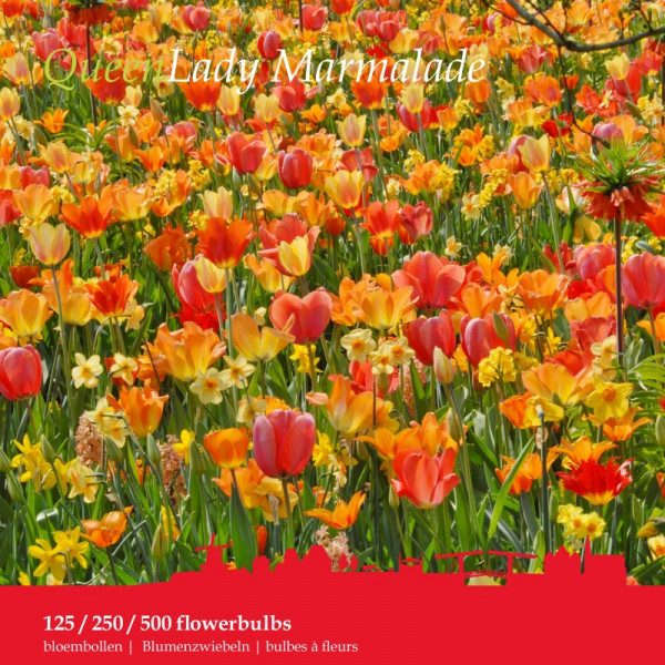 Flower Bulb Collection LADY MARMALADE 125