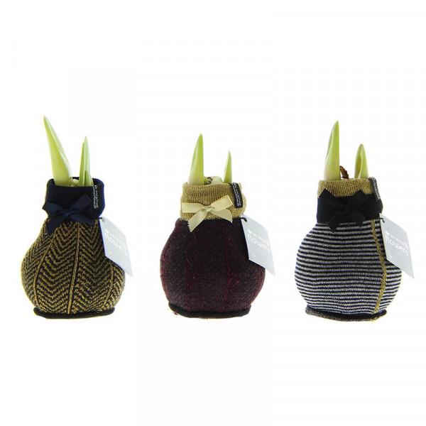 Wax Amaryllis Fashionz Elegant Mix