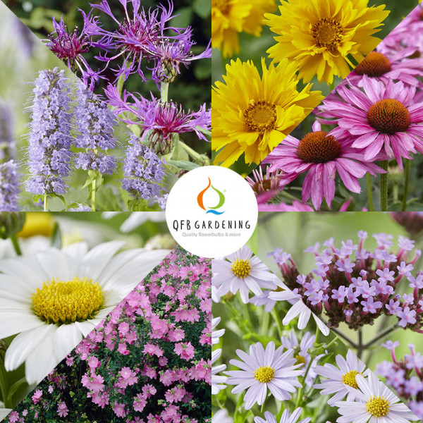 Border Collection Butterfly Friendly Plants